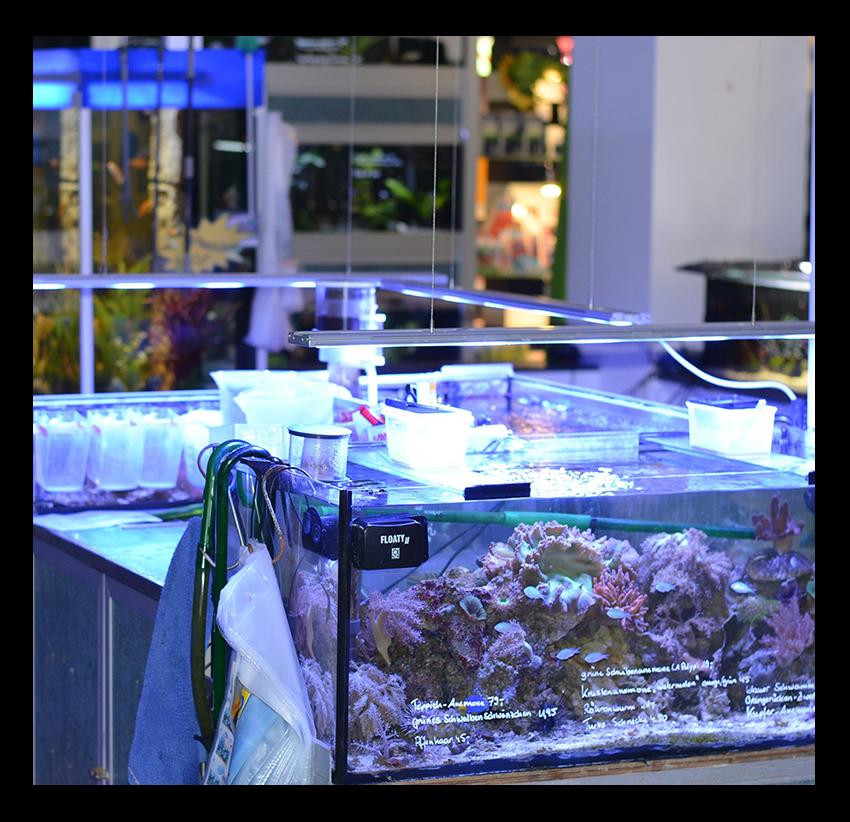 Aquarienservice