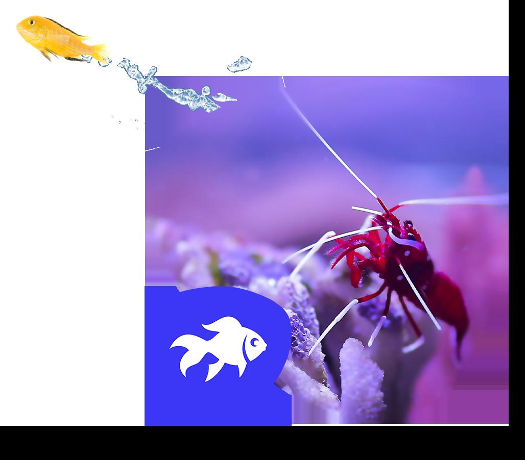 Startseite Aquaristik4