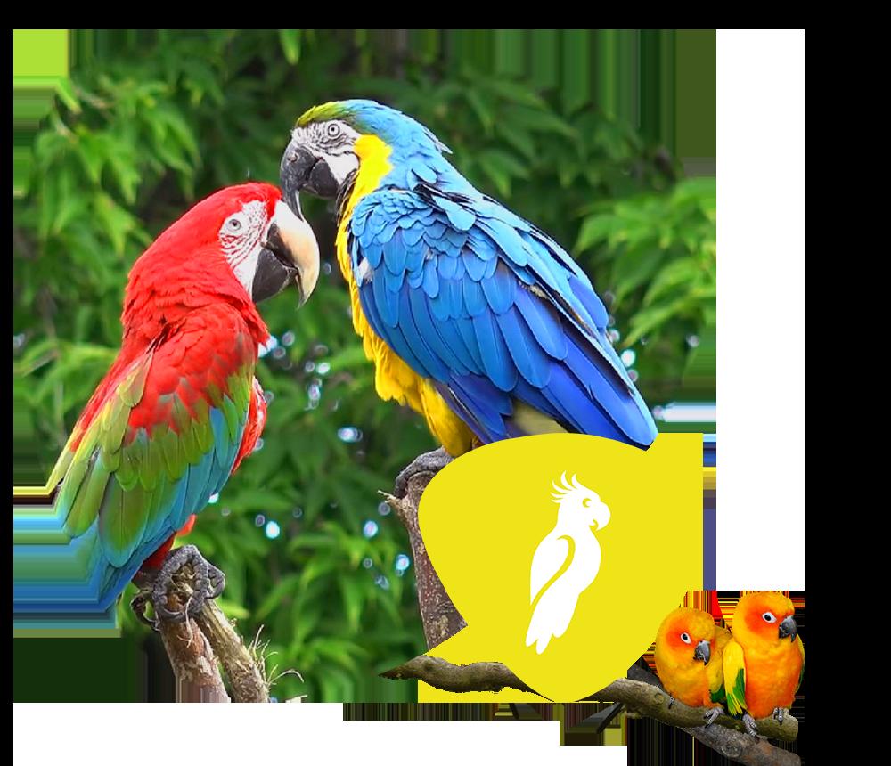 Startseite Vögel4