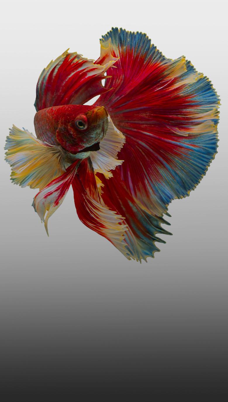 Aquaristikjpg2