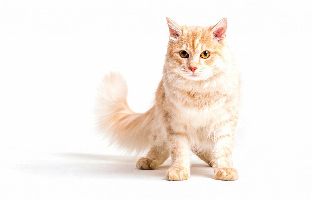 Katze 22